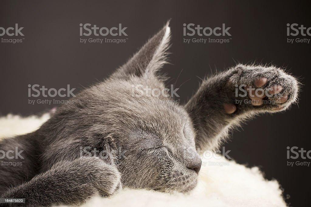Kitten. royalty-free stock photo