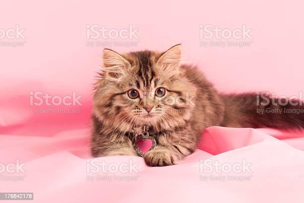 Kitten Stock Photo - Download Image Now