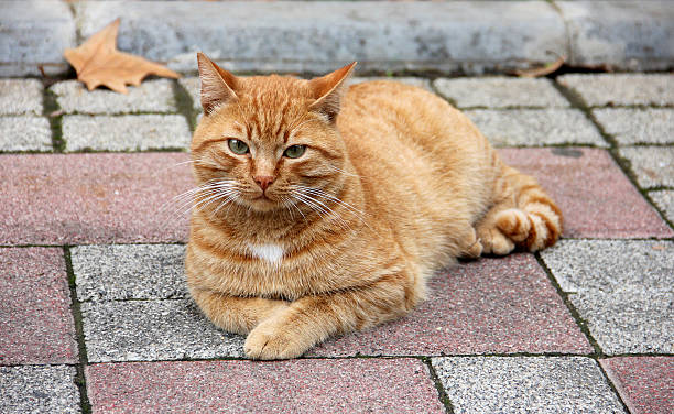 Kitten picture id454352461?b=1&k=6&m=454352461&s=612x612&w=0&h=f8ykb3kwe5wxcodoyxxyk6otzgyzils1ghjgm9zdsve=