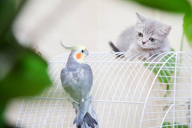 Filhote de gato - foto de acervo