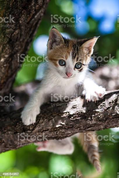Kitten picture id498054952?b=1&k=6&m=498054952&s=612x612&h=5nrap2ncncmxtfq5li1eed9ku5vs6koq4yf8yu ofgg=