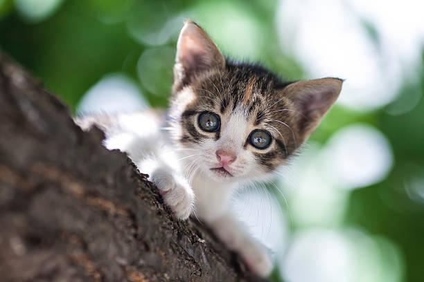 Kitten picture id498055834?b=1&k=6&m=498055834&s=612x612&w=0&h=ctsmkaxnx4vznbsyckslrx5xcxjvly qqwygaykcy8m=