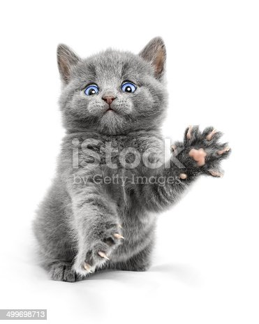 Scared kitten attacks on white background