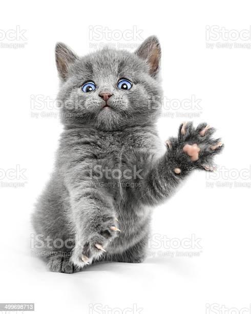 Kitten picture id499698713?b=1&k=6&m=499698713&s=612x612&h=nvbf6a3svs4biveusfdol02kaj0tqpebdzejugcuuby=