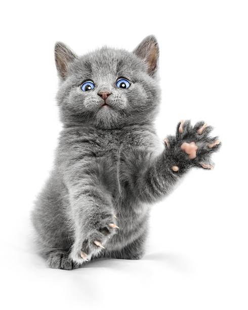 Kitten picture id499698713?b=1&k=6&m=499698713&s=612x612&w=0&h=eqtlteciuhmhsmxorki3dz6s38pubzcsnk21  tggx4=