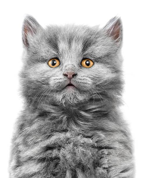 Kitten picture id499741113?b=1&k=6&m=499741113&s=612x612&w=0&h=zzez7kayvx4ok6asvvg2q8vh8 wlbpjxveinkxpmf c=