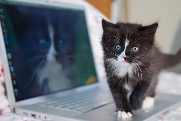 Kitten picture id529836469?b=1&k=6&m=529836469&s=612x612&w=0&h=jvj8exr4xm04n5dszo ttjd4fl4z uqvcwrwbzwm xa=