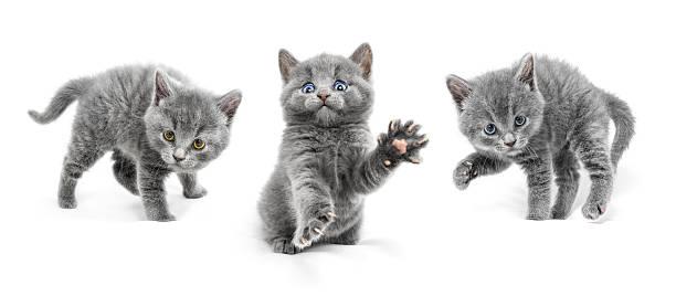 Kitten picture id585625712?b=1&k=6&m=585625712&s=612x612&w=0&h=jhbogbu97szcizteu mgmtfdq6m7b4usbxfzl2b4jne=