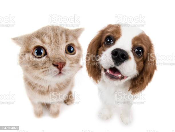 Kitten picture id647004072?b=1&k=6&m=647004072&s=612x612&h=fvc2elcbxbjm8amzbei7df1lsbfhoxnzgpbljizf g4=