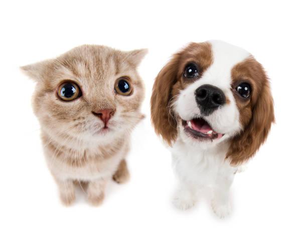 Kitten picture id647004072?b=1&k=6&m=647004072&s=612x612&w=0&h=4su awgskt mjfjfpm7faowxzxu4rg08pkwfavv0uk0=