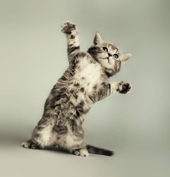 Kitten picture id647153740?b=1&k=6&m=647153740&s=612x612&w=0&h=30axtlptf auacn6dvg9hynmqiwshau3 zwtxbpylpq=