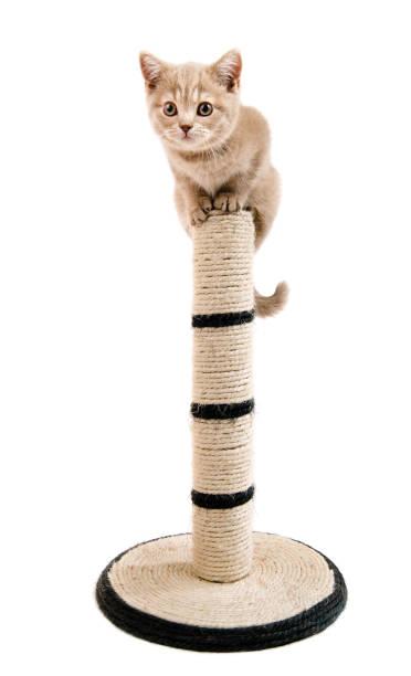 Kitten picture id649664338?b=1&k=6&m=649664338&s=612x612&w=0&h=zkorpucrdp09tl bwfhhor2rlihd7ttem7ifoqmxofe=