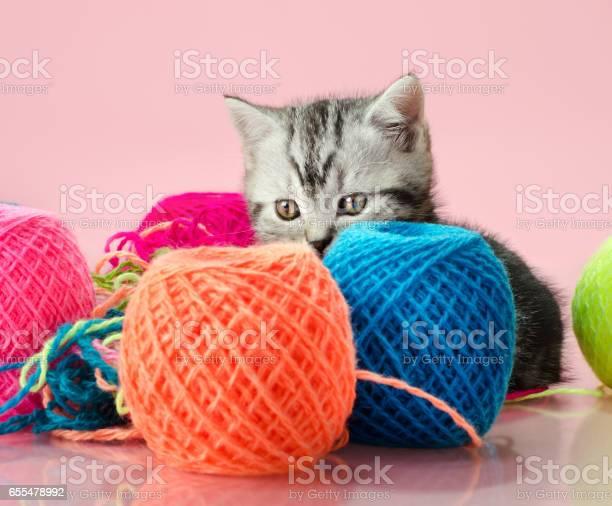Kitten picture id655478992?b=1&k=6&m=655478992&s=612x612&h=ebftkyufb4jk6o1kkvyznrnm0cb6mowffxg zdh6vms=