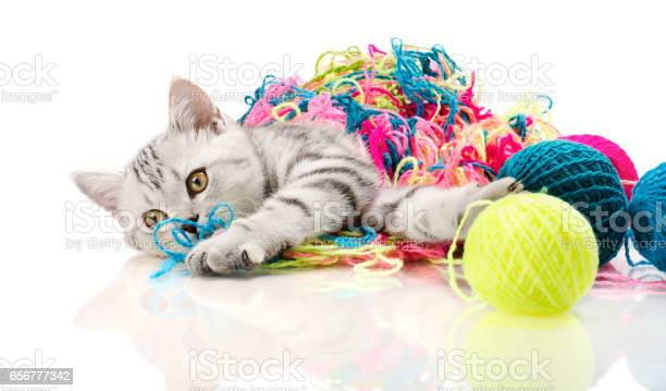 Kitten picture id656777342?b=1&k=6&m=656777342&s=612x612&h=r1vvuj94fladxqhg9e7o0xsapzny6e4jnyhad h28mk=