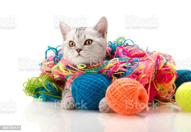 Kitten picture id656780474?b=1&k=6&m=656780474&s=612x612&h=eqragtu792xcitepsbgyat9v q3zgu8k8vkckf8sc9u=