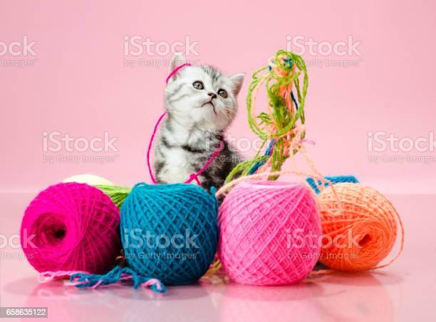 Kitten picture id658635122?b=1&k=6&m=658635122&s=612x612&h=8f9ubfkc wjyso zwejf q2lg0pj3f4zexpq0iyjjmy=