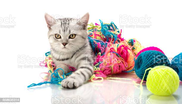 Kitten picture id658635314?b=1&k=6&m=658635314&s=612x612&h= 4ps0 gxvwdv0wnaaw mojvjvioozj30gdjax70a1de=