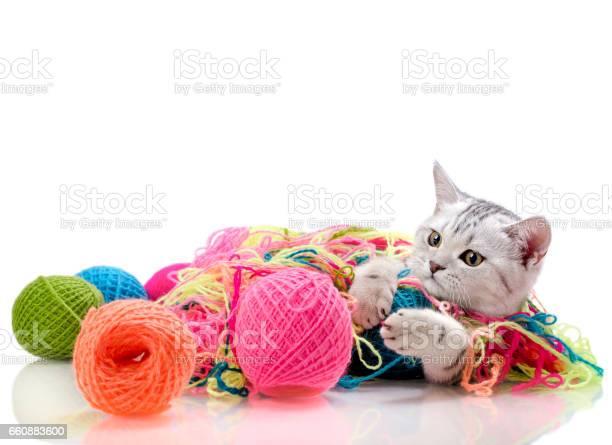 Kitten picture id660883600?b=1&k=6&m=660883600&s=612x612&h=uwbxyww9dyk4u2w 3undowwp2bayjhwsoqmx lyt0sk=