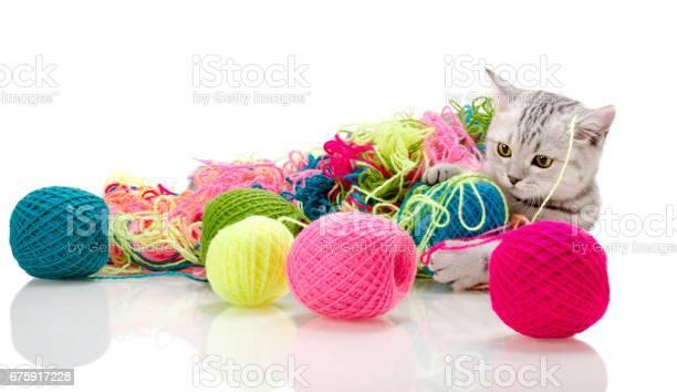 Kitten picture id675917228?b=1&k=6&m=675917228&s=612x612&h=7htsaq5ycsgeabuajgu 97m17btbsb9nl4k 4axxlai=