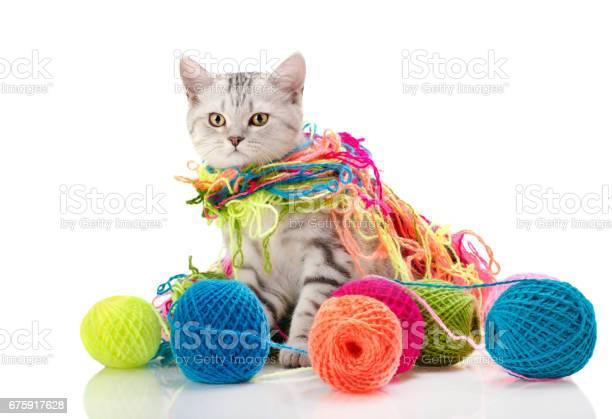 Kitten picture id675917628?b=1&k=6&m=675917628&s=612x612&h=r6slobih y7i9gys3thdvgbwiqlmbsbm5s4u grny4q=