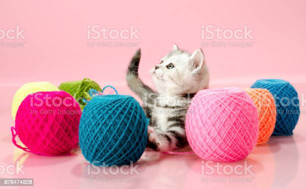 Kitten picture id676474528?b=1&k=6&m=676474528&s=612x612&h=hpmhnmfm1592loqaypmnezeqncuyeoejomwrabebuhy=