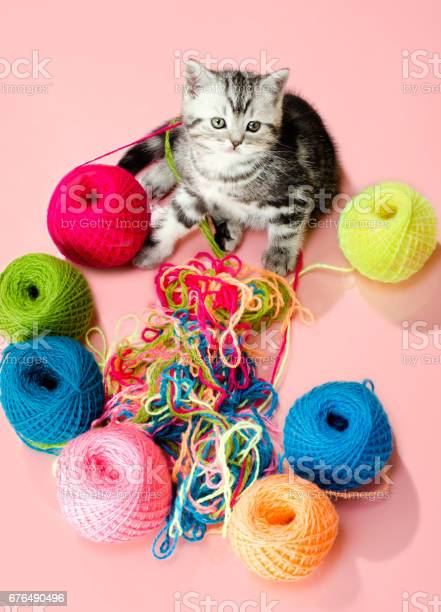 Kitten picture id676490496?b=1&k=6&m=676490496&s=612x612&h=0wcf91rgjkumclotj3lmyhzfuj7agdkej4pvghudwyw=