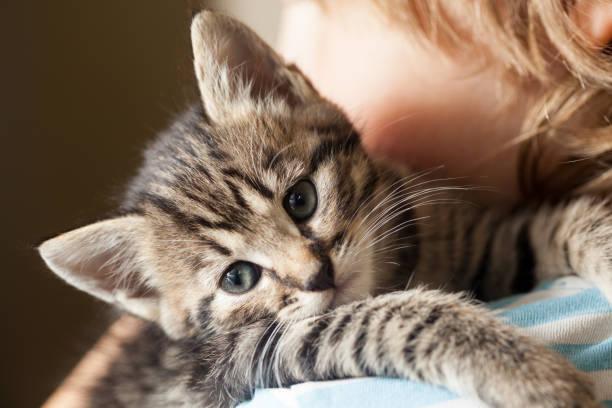 Kitten picture id696189514?b=1&k=6&m=696189514&s=612x612&w=0&h=vaqwjdai2uurwtlfewzezdldykk64vsx 2ugwthqcwe=