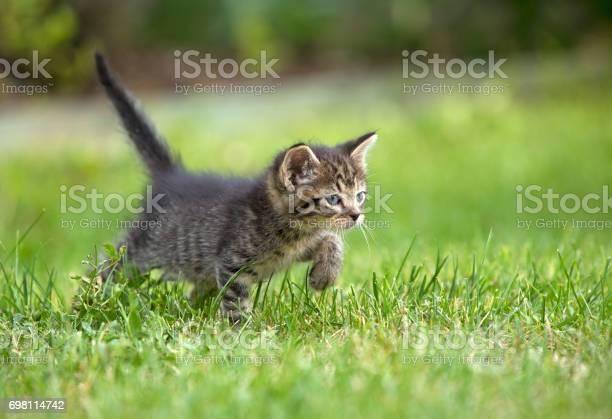 Kitten picture id698114742?b=1&k=6&m=698114742&s=612x612&h=pb saowak3vja61javtisnmf2uozvtngbwr7j8t2hxe=