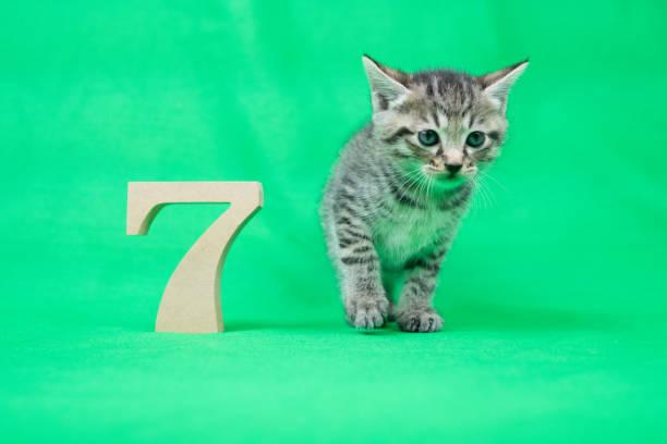 Kitten picture id873142322?b=1&k=6&m=873142322&s=612x612&w=0&h=icbyerxixysixxshmvtyy yjalohzg zxguygqrum10=
