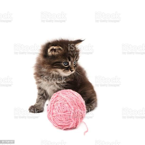 Kitten picture id91708197?b=1&k=6&m=91708197&s=612x612&h=f0e3i tncul2fvyxhbxbtbfkecch vr6 ibutle7xdq=