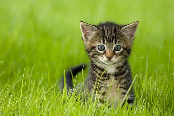 Kitten picture id93485228?b=1&k=6&m=93485228&s=612x612&w=0&h=esrep08aeb3totbgonwcvzvzgqgzv2hehb89q0voo5k=