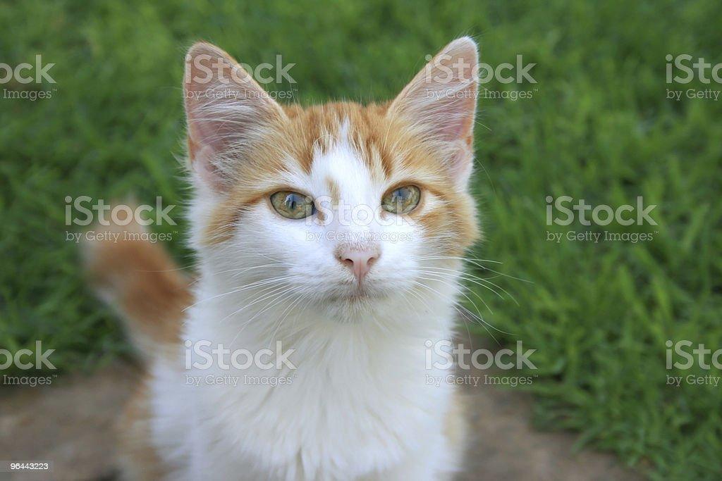 Kitten - Royalty-free Bruin Stockfoto