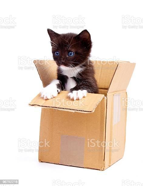 Kitten picture id96752218?b=1&k=6&m=96752218&s=612x612&h=dmqn78jkyz2qc3bfatjwersplaevpj gz7s 1in0pc8=