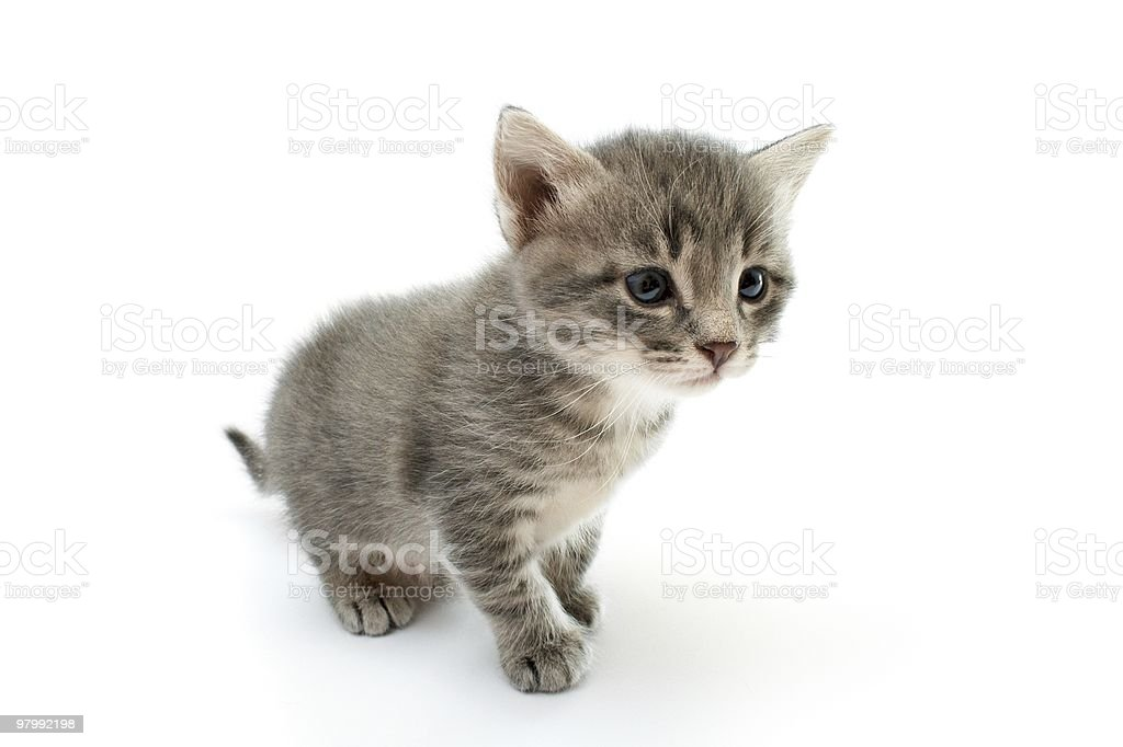 kitten royalty free stockfoto