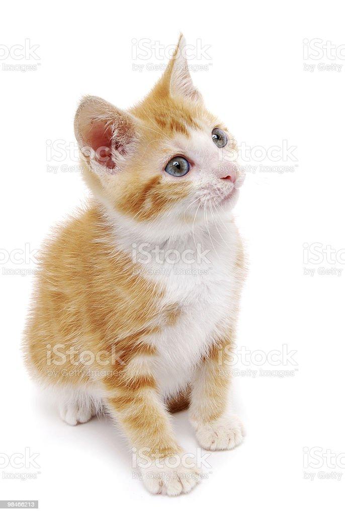 고양이 새끼 royalty-free 스톡 사진