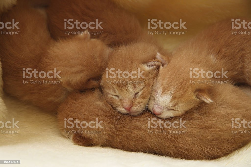 Kitten pile up royalty-free stock photo