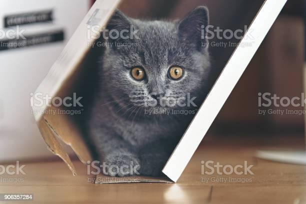 Kitten playing in a cardboard picture id906357284?b=1&k=6&m=906357284&s=612x612&h=os6awmskaex1d5vhuvugokwbkmzwtfm5su pfkppc00=