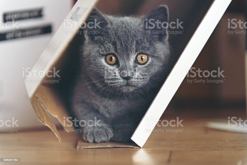 Kitten playing in a cardboard stock photo