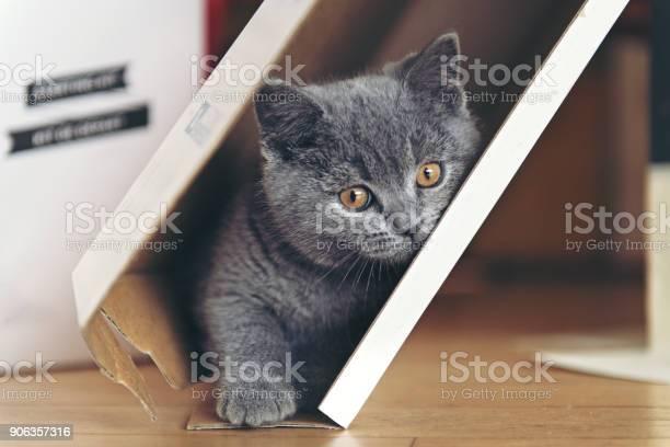 Kitten playing in a cardboard picture id906357316?b=1&k=6&m=906357316&s=612x612&h=lffiwbincgafb1vz8ntqmc4otmk5n4izxjoox5aequ8=
