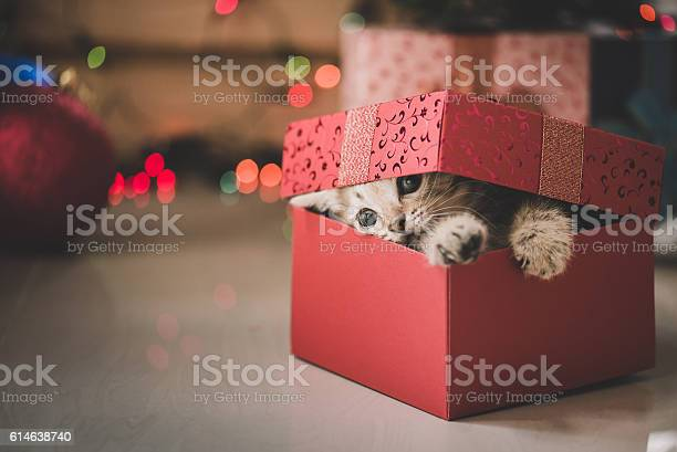 Kitten playing in a gift box picture id614638740?b=1&k=6&m=614638740&s=612x612&h=uaft1rkhwlj6y6vxpt8kq9pmifikrzvomufamhufgkw=