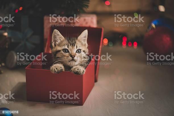 Kitten playing in a gift box picture id614704016?b=1&k=6&m=614704016&s=612x612&h=taokqxloyz0cbi i xsxgbzgostypageaeker9c nvq=