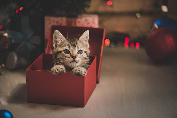 kitten playing in a gift box - katze weihnachten stock-fotos und bilder
