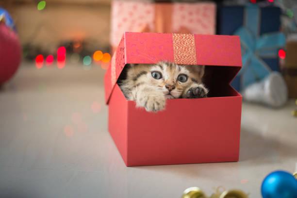 Kitten playing in a gift box picture id655644918?b=1&k=6&m=655644918&s=612x612&w=0&h=7m0nf7dqcj0 oybejawnmg rgdjzmemddrff6nuxbg4=