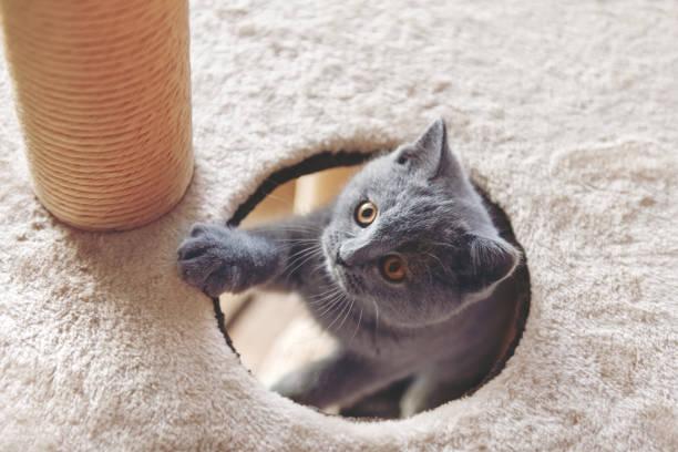 Kitten playing in a tree cat toy picture id909195584?b=1&k=6&m=909195584&s=612x612&w=0&h=gqbapfjz0susqsp9il3cr5vlcpknuvtegyhgapdk81i=
