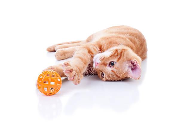 Kitten Playing On White stock photo