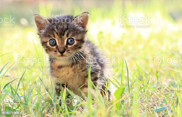 Kitten playing outdoors picture id619371308?b=1&k=6&m=619371308&s=612x612&h=y9cmnpfsz6fejyz y7vcp6x0ygddq8bl2l78f3ajnvk=