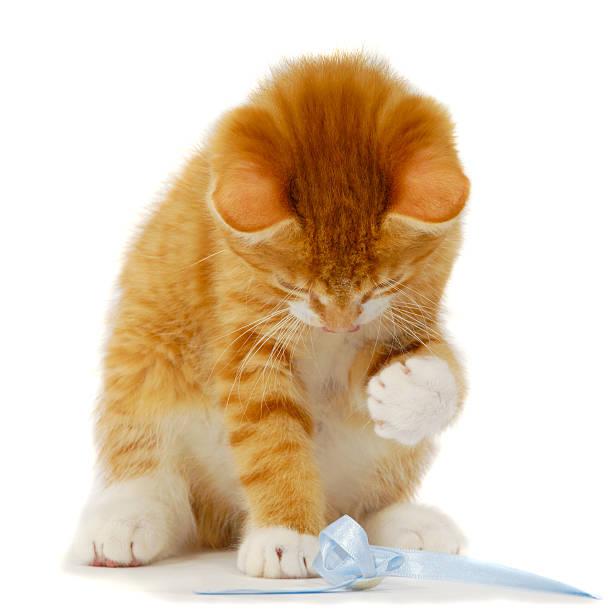 Kitten playing picture id119354132?b=1&k=6&m=119354132&s=612x612&w=0&h=bycoo5ashqol0b5kig1gi nmaodyg s4g8kvhbqhq9c=
