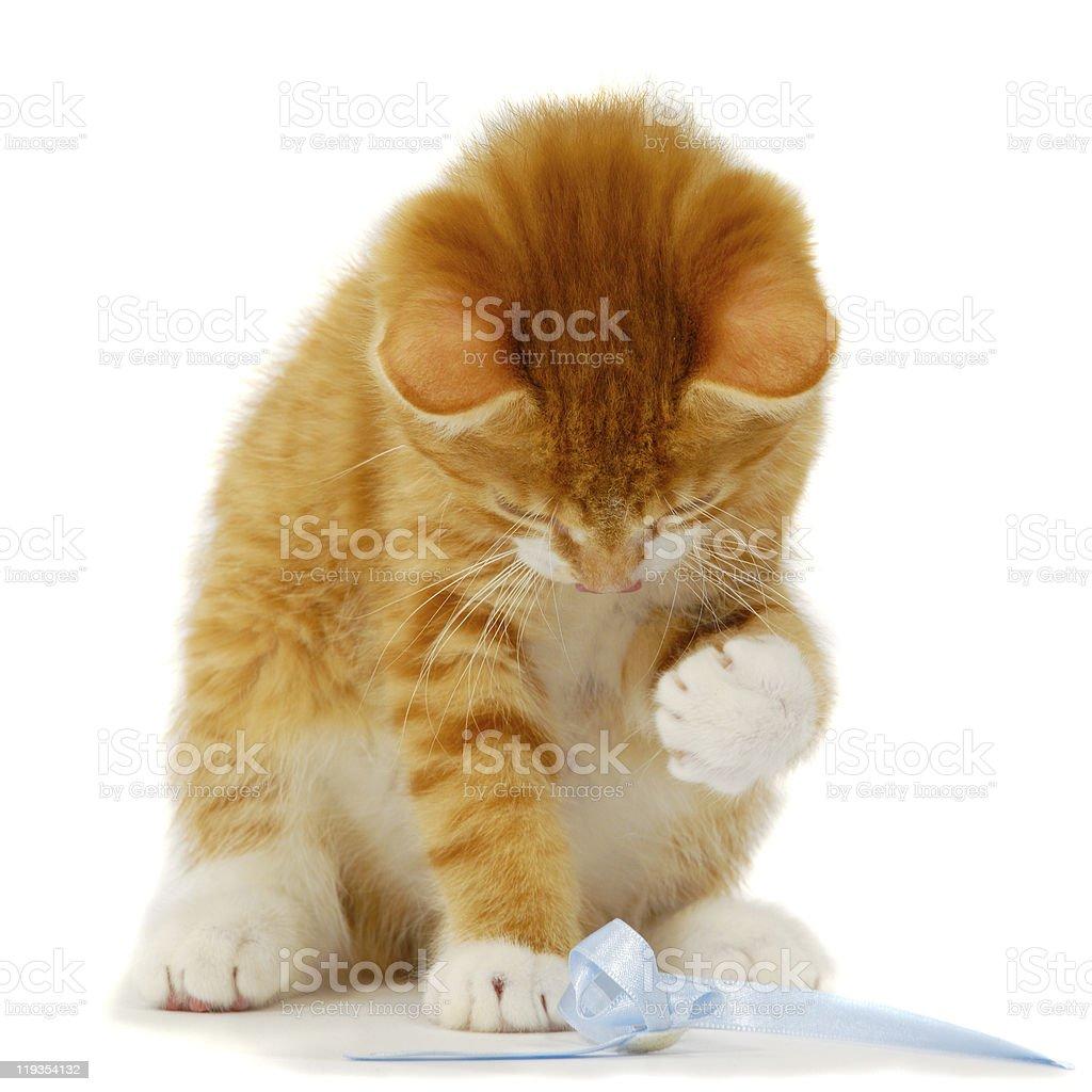 Kitten playing stock photo