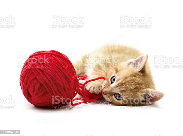 Kitten playing picture id173567619?b=1&k=6&m=173567619&s=612x612&h=i8w4t4r g h 3imbygtzh559djyoa2eniaxnkwysvgc=