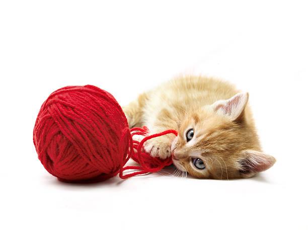 Kitten playing picture id173567619?b=1&k=6&m=173567619&s=612x612&w=0&h=qbaanxf97vjw4z3hryv8avozpwochybsnizovnqsqqy=